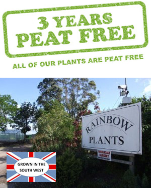 All of our plants are peat free