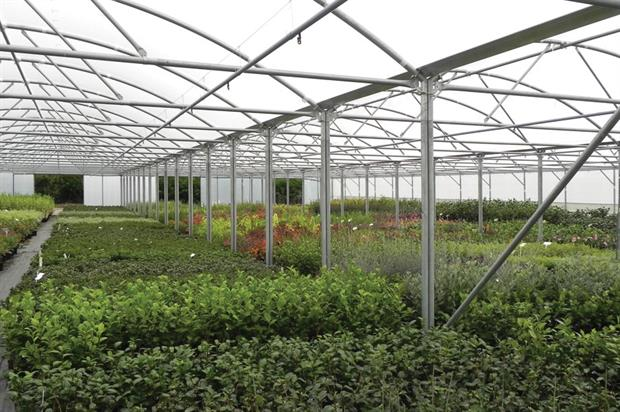Our innovative poly tunnels at Rainbow Plants were featured in Horticultural Week