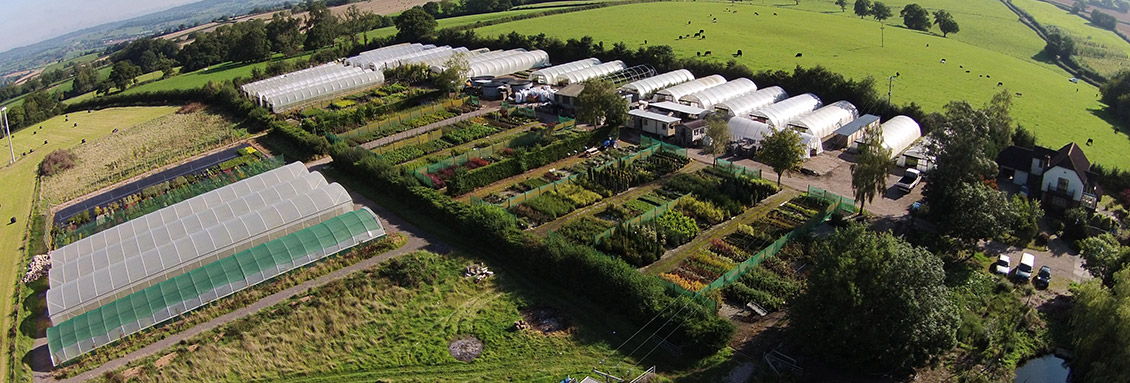 An aerial shot of Rainbow Plants wholesale plants for sale