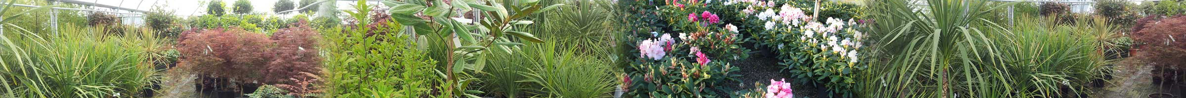 Rainbow Plants