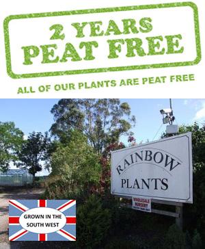 Rainbow Plants are 2 Years Peat Free