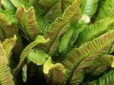 Buy plants wholesale Devon | Evergreens, shrubs, trees for sale