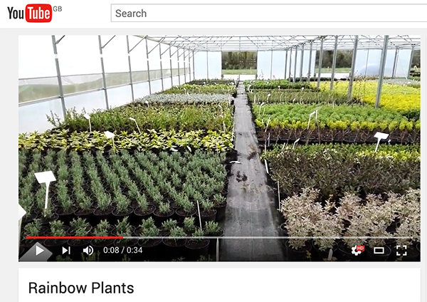 Rainbow Plants is now on You Tube